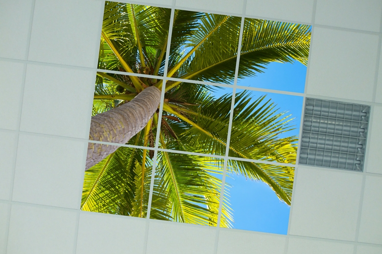 Fotopaneel palmboom